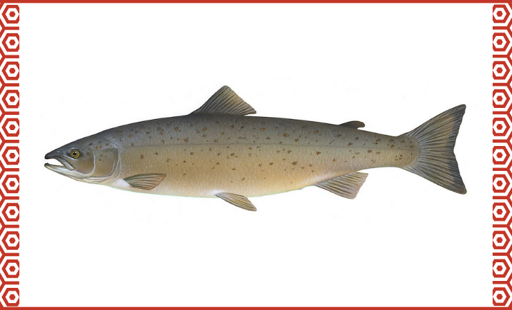 Salmon Is Mostly Found in Russia and Alaska